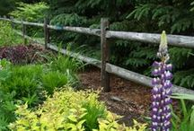 Fences / I find fences interesting photo subjects.  How about you? / by Wilson Lake Inn