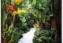 Tropical  Gardens / Tropical garden design. Tropical landscaping. Tropical garden plants. Balinese garden statues. / by Anke Metzger