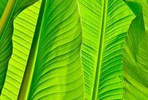 Leaves / Tropical leaves, ferns,grass. Blätter. / by Anke Metzger