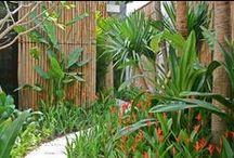 Tropical Garden Paths / Tropical landscaping. Tropical garden paths. Tropische garten wege. / by Anke Metzger