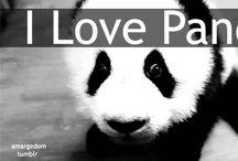 Panda / by lucy reynolds