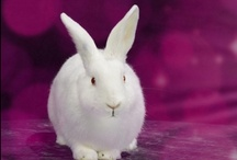 My First Rabbit  / Thinking about adopting a rabbit? Here are some must-haves for your little cottontail. / by Petco