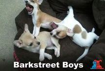 Caption This! / Check out these pet memes and captions. / by Petco