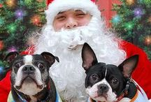 """Pet Photos with Santa / Petco will be hosting our Photos with Santa event Saturday, December 7th and 14th, from 1pm to 4pm.  Let your pet smile for the camera and bring home a 4""""x6"""" photo in a keepsake frame.  Proceeds from your $8.95 donation will go to the Petco Foundation, to help support pets in need. / by Petco"""