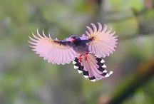Birds / by Joel Castellanos Navarrete
