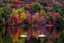 """Those Wonderful Days of Fall"" / by Joe Cochran"