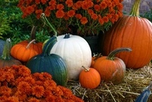 Fall Home Decorating Ideas / Pins of some of our favorite ideas for your home this fall. / by Jonathan Green