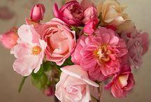 Beautiful / So pretty! / by Emily Brosnan