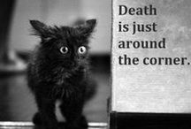 Horror Humor / A collection of all things darkly humorous. Its more than just horror ... its fun!  / by MoreThanHorror.com