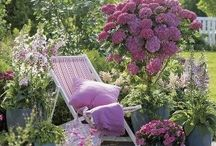 Our garden, our relaxation / by Mama Ka
