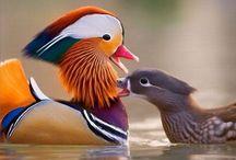 Fabulous Birds / by Katy Cunningham