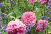 In my garden.... / by Tania Finke
