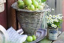 sauvignon blanc / melons. green apple. grass. grapefruit.  / by Bianchi Winery