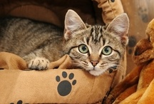 Cat Tips & Tricks / Tips and tricks for your feline friend. / by VCA Animal Hospitals