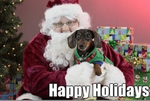 Holiday Cheer 2012 / We wish all our two and four-legged friends a happy and safe holiday season! / by VCA Animal Hospitals