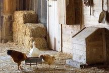 Country farmhouse / by Michela Pozzi