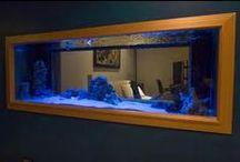 Fish Tanks / by Sherri Moore