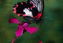 Butterflies  / by Sherri Moore