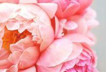 Looks Like Spring / by StyleList