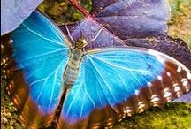Butterfly / by Yalin Budak