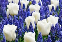 Glorious Gardens  / by Lisa Patton