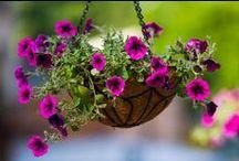 Jardineria / by Carolina Abarca
