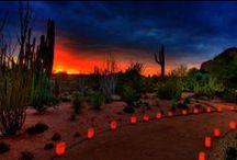 Desert Botanical Gardens / by Kathy Luksich