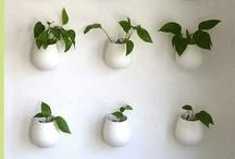 Grow / by Dawn Ruggles