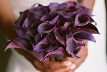 Wedding / by Erica Faulhaber
