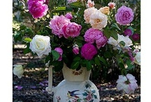 Flower arranging / by Charlotte-Daffodil Planter- Germane