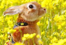 Bunny / by Yumiko Hattori
