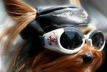 Dog Desing  / Style / by Jacqueline Benavides