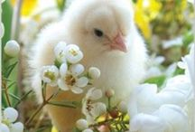 Easter EGG- citement / Eggs•chicks•Flowers•fun•decorations •so much more•• / by Vickie Benedict