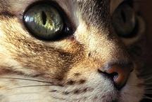 Aminals / Pet craze :) / by Amanda Lewman