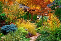 Gardening / Garden ideas, tips, accessories, and layouts. / by Amanda Lewman