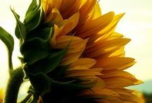 Flowers / by Linda Sumruld