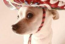 Chihuahuas.......... / by Natalie Powers