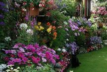 Flowers, grasses, mushrooms, & cactis / by Haleene Williams