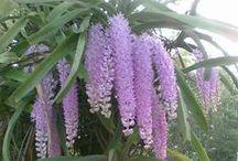 Orchids / by Loni Mahanta