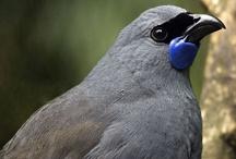 Birds / by Kristin Ivill