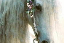 For the Love of Horses. / by Alyssa Henry