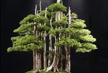 Bonsai Tree Art... / by Bill Shattuck