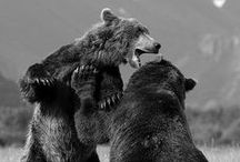 Ursidae…(Bears)  / Urs is Romanian for Bear / by RDDZS