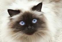 Cats & friends / Gatos, si. Pero sin olvidar a perros, leones, tigres, elefantes, canguros. Todos nuestros compañeros de viaje en esta nave llamada Tierra. / by Sibyll Deco