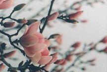 Flowers / by Prendre le temps ...