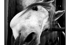 ~Horses~ / by Patricia Gonzales/Tru Heart Photography