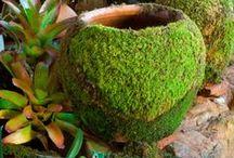 Gardens&Gardening & Diy / by Angela Landim