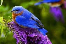 Kuşlar ( Birds ) / by Mehtap Genç