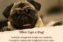 Favorite Quotes / by Bailey Puggins The Pug