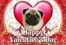 ♥ PUG VALENTINE CARDS ♥ / Valentine's Day Cards For Pug Lovers! / by Bailey Puggins The Pug